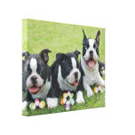 Easter boston terriers canvas print