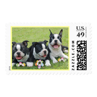 Easter Boston Terriers postage