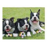 Easter boston terriers postcard