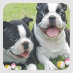 Easter Boston Terriers Square Sticker