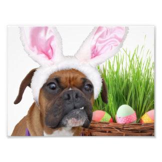 Easter boxer dog photo print