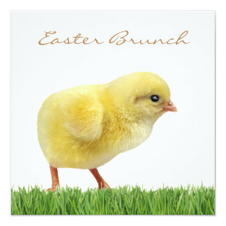 "easter brunch square 5.25"" x 5.25"" Invitations"
