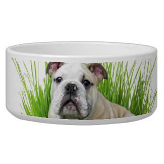 Easter bulldog bowl