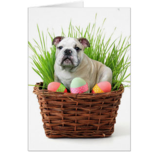 Easter bulldog card