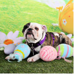 Easter - Bulldog - Delilah Acrylic Cut Outs