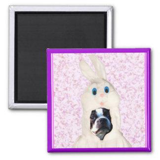 Easter bunny boston terrier magnet