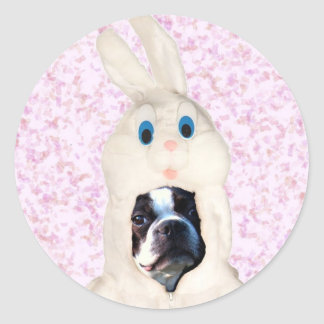 Easter bunny boston terrier stickers