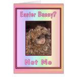 Easter Bunny? Card