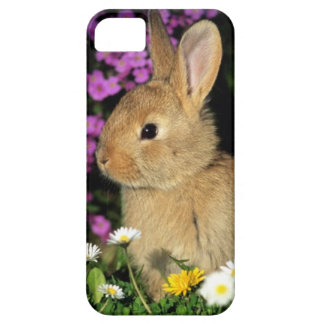 Easter Bunny iPhone 5 Cases