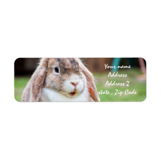 Easter Bunny Label