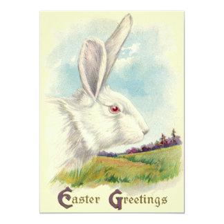 Easter Bunny White Albino Field Card
