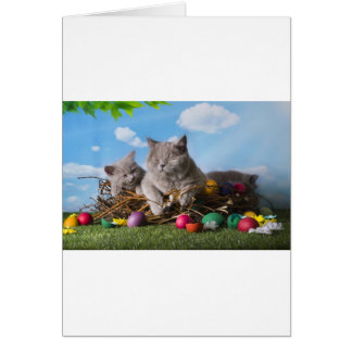 Easter Cats Card