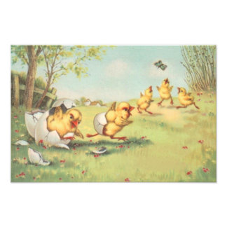 Easter Chick Butterfly Farmyard Photographic Print