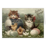 Easter Chick Colored Egg Kitten Cat Card