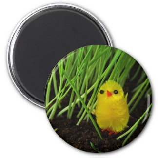 Easter Chick Magnet