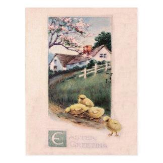 Easter Chick Yard Dogwood Tree Postcard
