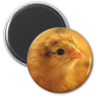 Easter Chicken Fridge Magnet