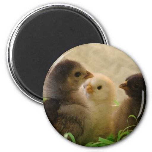 Easter Chickens 2 Inch Round Magnet