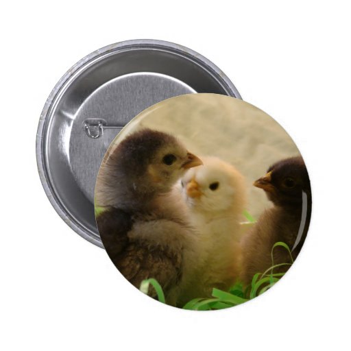 Easter Chickens Pin