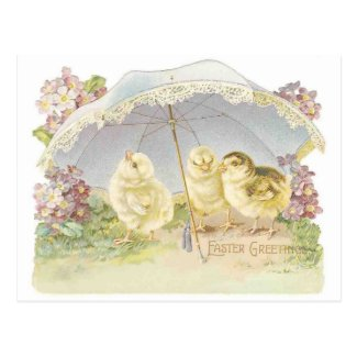 easter chicks bright postcard