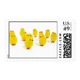 Easter chicks stamp