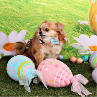 Easter - Chihuahua - Carlito Photo Cut Outs