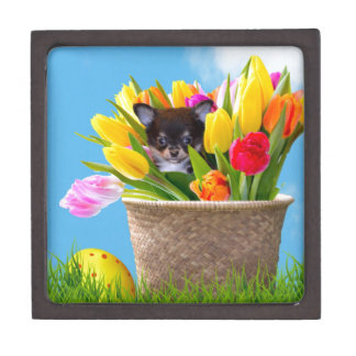 Easter Chihuahua dog Gift Box
