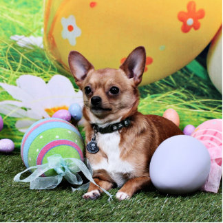 Easter - Chihuahua - Rambo Cut Outs