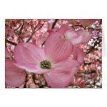 EASTER Colors Warmth Peacefulness Cards
