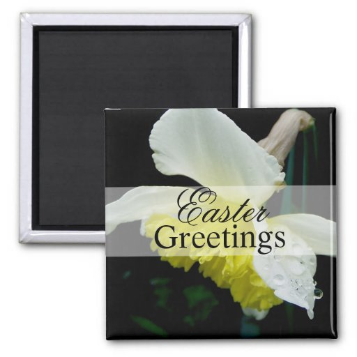 Easter Daffodil Magnets