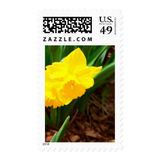 Easter Daffodil Stamps