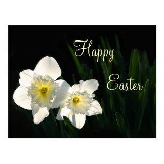 Easter daffodils postcard