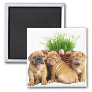 Easter Dogue de Bordeaux pups 2 Inch Square Magnet