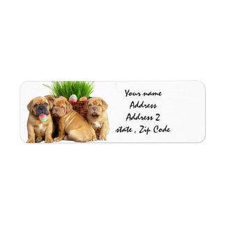 Easter Dogue de Bordeaux pups Label