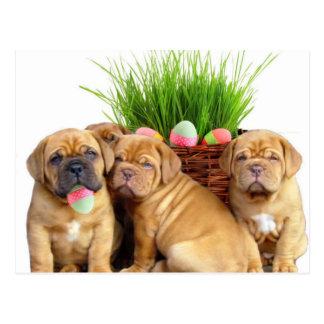 Easter Dogue de Bordeaux pups Postcard