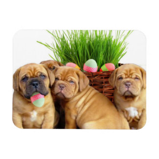 Easter Dogue de Bordeaux pups Rectangular Photo Magnet