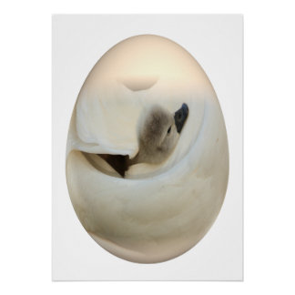 easter egg baby swan posters