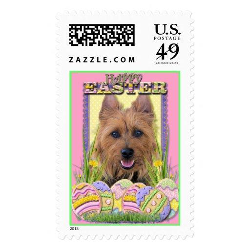 Easter Egg Cookies - Australian Terrier Postage