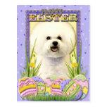 Easter Egg Cookies - Bichon Frise Postcard