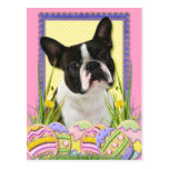 Easter Egg Cookies - Boston Terrier Post Cards