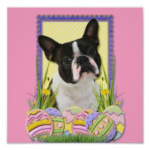 Easter Egg Cookies - Boston Terrier Poster