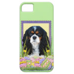 Easter Egg Cookies - Cavalier - Tri-color iPhone 5 Case
