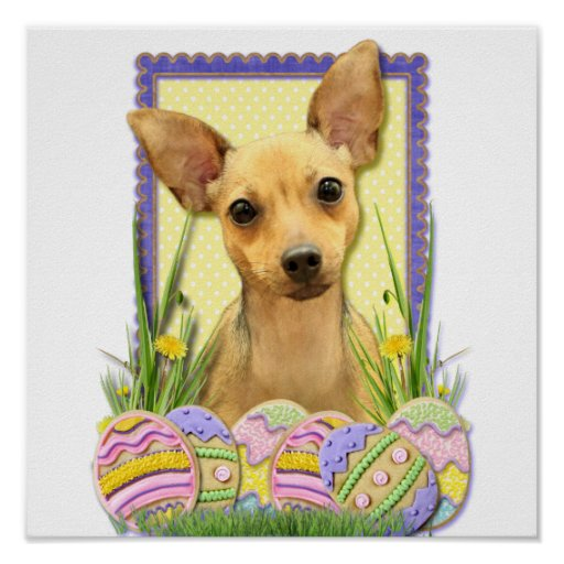 Easter Egg Cookies - Chihuahua - Daisy Poster