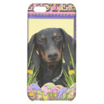 Easter Egg Cookies - Dachshund Cover For iPhone 5C