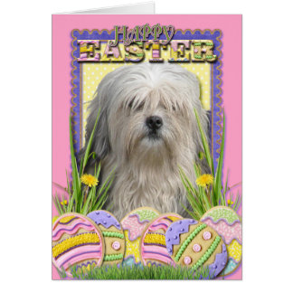 Easter Egg Cookies - Lowchen Greeting Card