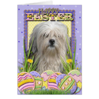 Easter Egg Cookies - Lowchen Greeting Cards