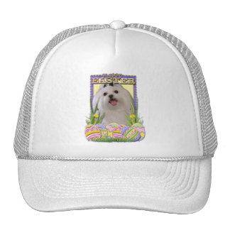 Easter Egg Cookies - Maltese Trucker Hat