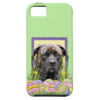 Easter Egg Cookies - Mastiff iPhone SE/5/5s Case