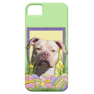 Easter Egg Cookies - Pitbull - Jersey Girl iPhone 5 Cover