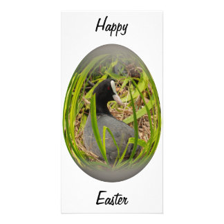 easter egg coot on her nest card